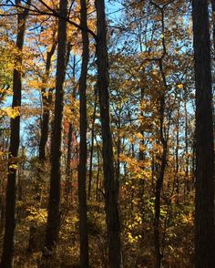 #WonderWatch 2015-131 The Goldening #TakeNotice #October #oh #GoldenLight #fall #FallFoliage #FavoriteTimeOfYear #UpperDelawareRiverRegion #Autumn #LookAround #beauty #forest #GoldenForest #GlimpsesOfFall #HeartGround #leaves #nature #Peaceful #PoconoMtns #Yellow