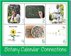 Free Botany Calendar Connections Cards from www.1plus1plus1equals1.net