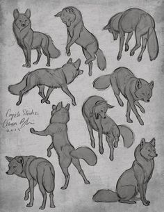 I really like these wolf poses. I really like these wolf poses. Drawing Poses, Drawing Tips, Drawing Reference, Drawing Sketches, Dog Drawing Tutorial, Sketching, Manga Drawing, Drawing Art, Drawing Ideas