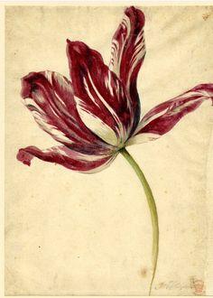 jan van huysum flowers - Szukaj w Google