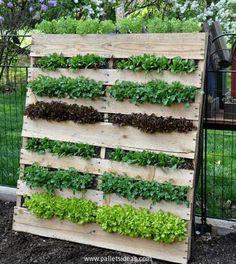 Ideas for Pallet Garden Recycling-Palettengarten Veg Garden, Vegetable Garden Design, Garden Planters, Pallet Greenhouse, Vertical Pallet Garden, Garden Pallet, Diy Pallet Projects, Garden Projects, Pallet Ideas