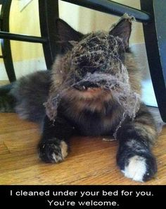 Cat Owners Will Understand (24 Pics) | Pleated-Jeans.com