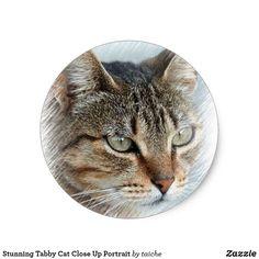 Stunning Tabby Cat Close Up Portrait Classic Round Sticker Stunning #Tabby #Cat Close Up #Portrait Classic Round #Sticker   Zazzle https://www.zazzle.com/stunning_tabby_cat_close_up_portrait_classic_round_sticker-217340783393917129