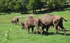 Examining Core Values on World Elephant Day World Elephant Day, Core Values, Kevin Macleod, Creatures, Horses, Rhinos, Animals, Bison, Elephants