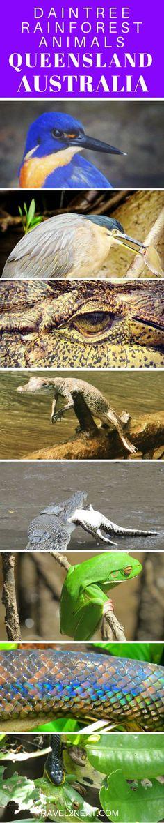 Daintree Rainforest Animals in North Queensland Australia.