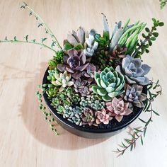 Succulent Arrangements, Succulents Garden, Plants, Instagram, Planters, Plant, Planting