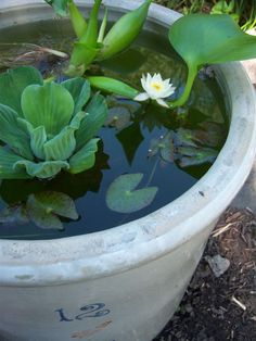 A Red Wing crock, no matter the size, makes a great container water garden. You can keep the plants minimal. Container Pond, Container Water Gardens, Water Containers, Container Gardening, Japanese Water Gardens, Small Water Gardens, Garden Fountains, Garden Pots, Red Wing Crock