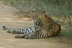 Bundala National Park, Hambantota