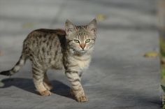http://www.sobi.org/photos/Cat/Istanbul/Laleli/DSC_5457.jpg