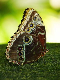 Butterfly on the Green by Aric Jaye on 500px