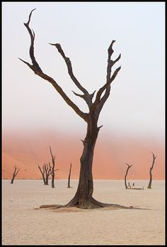 """Pictures taken across Africa and Asia on journeys through deserts and savannah. Featured are some beautiful wildlife scenes from Namibia's Etosha National Park, and strange mist shrouded scenes in the Namib Desert"" [©2012 JOHN KENNY]"