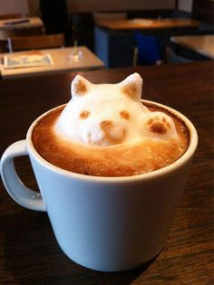#coffe #art #cat #amazing #artfood