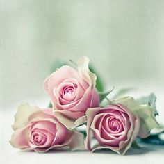 Rose contains a lot of natural benefits you probably don't know