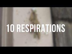Méditation guidée en français - observation des pensées - YouTube
