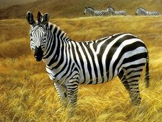 Find the best zebra wallpaper desktop dowload wallpaper for mobile phones and desktop computer. Find the latest free Images, photos, picture designs Wildlife Paintings, Nature Paintings, Wildlife Art, Oil Paintings, Zebra Painting, Zebra Art, African Animals, African Art, Safari Animals