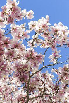 ✮ Spring Day