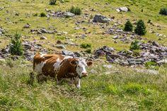 Rundwanderung Blatten/Fafleralp - Anenhütte - Lötschental Swiss Travel, Animals, Switzerland, Hiking, Acre, Ideas, Animales, Animaux, Animal
