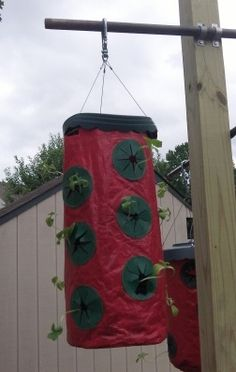 Growing Cucumbers in Topsy Turvy Planters. I have a few of these and so I am going to try this.