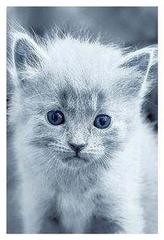 Framed Blue Kitty Print
