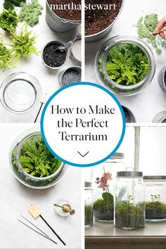 How To Make The Perfect Terrarium And Keep It Alive Even If You Don't Have Much Of A Green Thumb, Terrariums Act As Small, Self-Sustaining Ecosystems All On Their Own. Here Are The Secret Techniques For Growing A Garden Under Glass. Terrarium Diy, Closed Terrarium Plants, Small Terrarium, How To Make Terrariums, Terrarium Containers, Glass Terrarium Ideas, Making A Terrarium, Plants For Terrariums, Terrarium Centerpiece