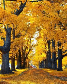 Nature& beauty simply takes my breath away! Nature& beauty simply takes my breath away! Nature& beauty simply takes my breath away! Fall Pictures, Nature Pictures, Beautiful Places, Beautiful Pictures, Autumn Scenes, Nature Wallpaper, Belle Photo, Beautiful Landscapes, Nature Photography