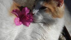 Mi gato modelo ♡