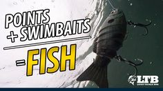 How To Fish Swimbaits on Secondary Points: Lucky Tackle Box Tips Bass Fishing Videos, Bass Fishing Tips, Going Fishing, Fishing Tackle, Fishing Stuff, Lucky Tackle Box, Goldfish Pond, Fishing Supplies, Saltwater Fishing
