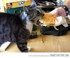 Finally, someone gave the cat a cheeseburger.