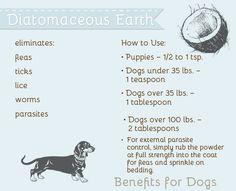The Pet Anthology | Health Benefits of Diatomaceous Earth - eliminates fleas and ticks! #health #pets #lifestyle