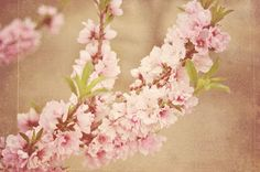 Going to get a peach tree branch and a rosary as a tattoo