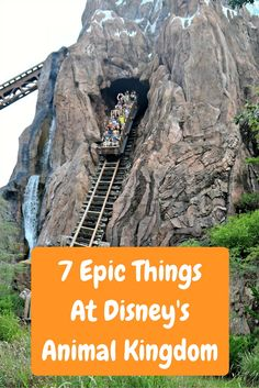 Animal Kingdom is one of the 4 amazing theme parks in the Walt Disney World Complex. Have you been?