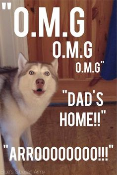 ..It's actually Mom who takes care of them all day but.. :D [Siberian Huskies ♡]