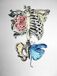 """skeleton, art, flora, flower, butterfly, abstraction"" from krzeci's flickr stream."
