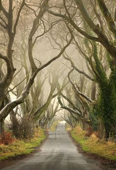 The Dark Hedges...just after Fall going into the winter season. Northern Ireland