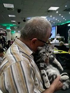 Szuszi Cat Kennel: Kiállítás Cat Kennel, Blog, Animals, Fictional Characters, Art, Art Background, Animales, Animaux, Kunst
