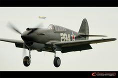 Curtiss P-40 Warhawk, Meeting de la Ferte-Alais 2011.
