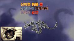 신비의 동물 용이 카메라에 포착된 순간 mysterious animal dragon was captured in the camera
