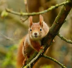 Red Squirrels Show Signs of Recovery from Deadly Poxvirus ~ The Ark In Space