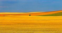 north dakota summer gold