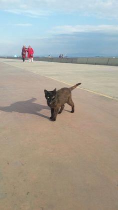 Just a cute, black cat crossing my path