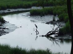 lazy l at willow creek - lewes, de