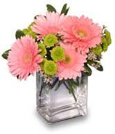 simple pink gerbera daisy centerpiece