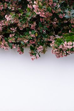 00 the shutterbugs: luisa brimble white wall with pink and green flowers / sfgirlbybay My Flower, Beautiful Flowers, Plants Are Friends, Flower Aesthetic, Mother Nature, Planting Flowers, Succulents, Music Artists, Aesthetics