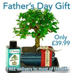 Artistic Oriental Style Father's Day Bonsai Kit