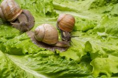 Organic Gardening, Gardening Tips, Pest Control, Household, Vegetables, Flowers, Plant, Vegetable Recipes, Organic Farming