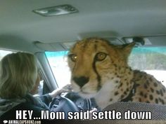 Love this! My parents needed that when my brother and I went with them on road trips!