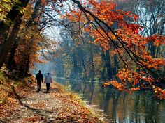 Lazy Ways to See Fall Leaves >> http://www.travelchannel.com/roam-blog/adventure/lazy-ways-to-see-the-fall-foliage?soc=pinterest