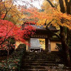 京都 大原 寂光院 紅葉 11月14日