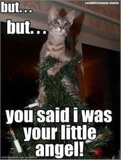 A big part of the reason I did not put up my Christmas tree this year...my cat would be up there all the time.