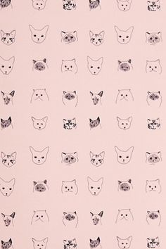 Cats Wallpaper. So cute. On the inside of a cupboard perhaps?